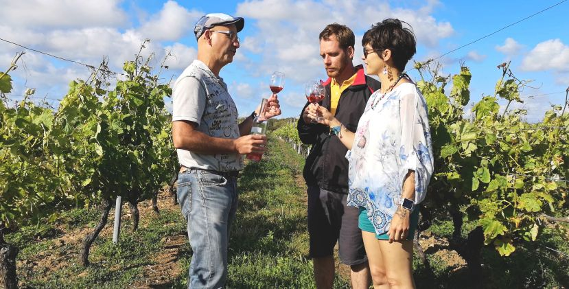 Wine on the island of Oléron! Vignoble Vincent Tour