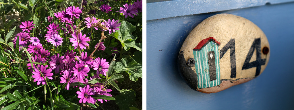Des fleurs magnifiques explosent de couleurs partout !
