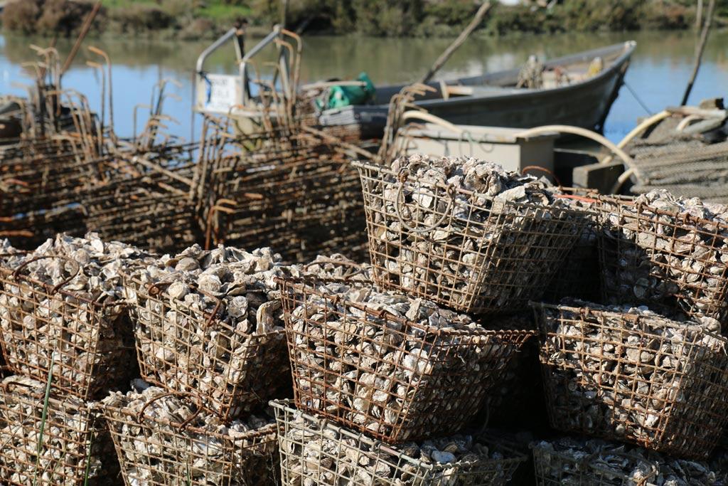 Huîtres de Dolus d'Oléron